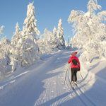 Fresh snow and sun are perfect for cross country skiing