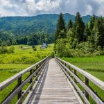 Beautiful walking and cycling path through Zelenci