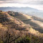 The view on the vineyards in Goriška brda