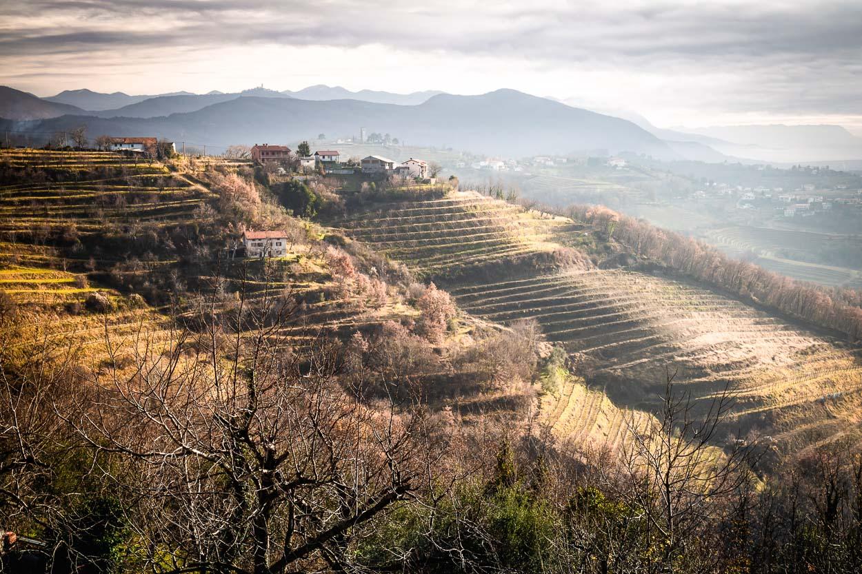 Goriska brda vineyrds