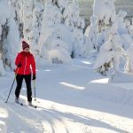 Cross-county skiing on fresh snow in Slovenia