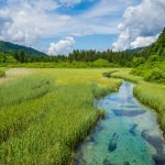 Green meadows and see-through waters in Zelenci
