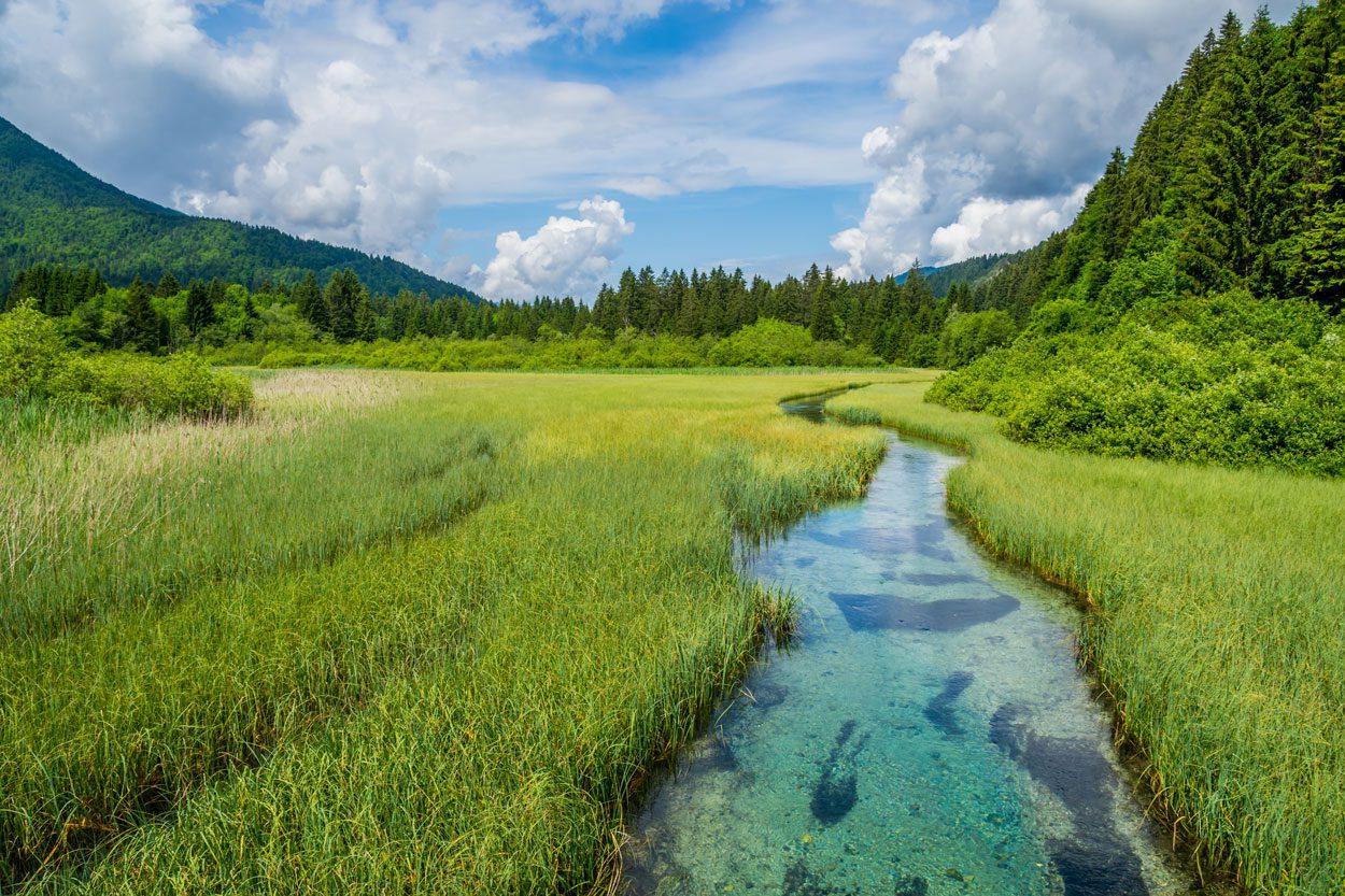 Beautiful Zelenci meadows