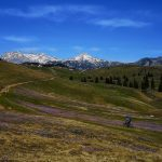 Biking through saffrons on Velika Planina