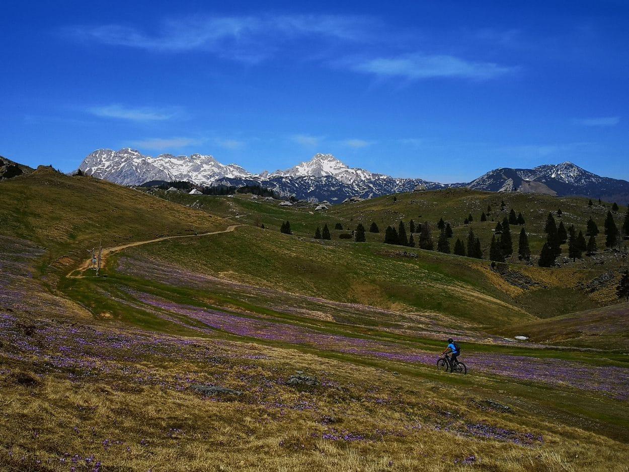 Biking-velika-planina-saffrons