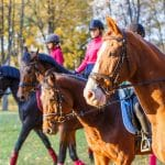 Horse riding in Bled