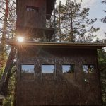 Brown bear observatory in Slovenia