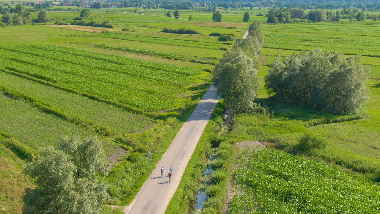 Road and cyclists surrounded by the fields