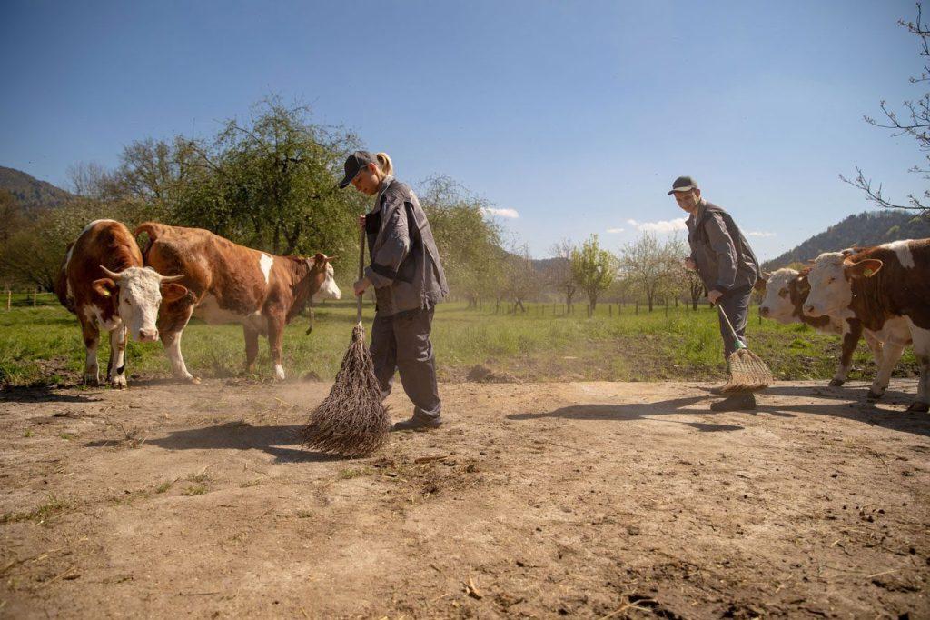 Experience life on a Slovenian farm