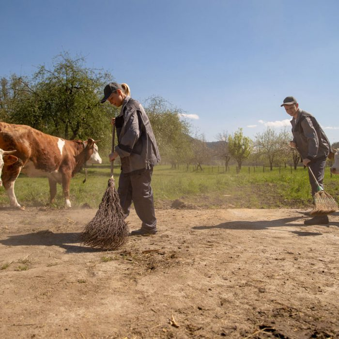 Experience-life-on-a-slovenian-farm
