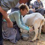 Meet the animals on Slovenian open farm