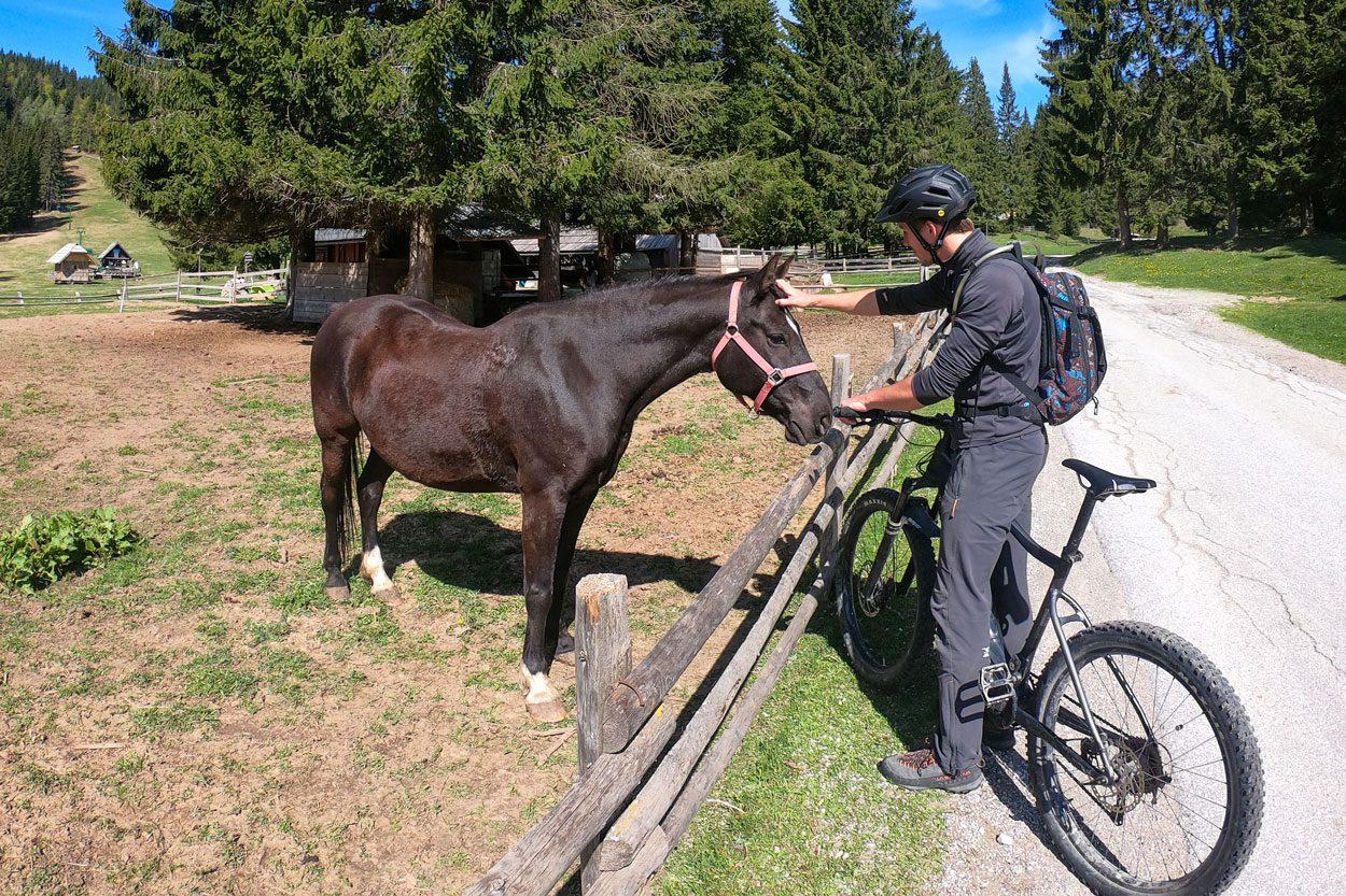 Horses on Pokljuka Platau Goreljek