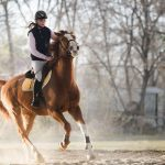 Horse riding with trained horses