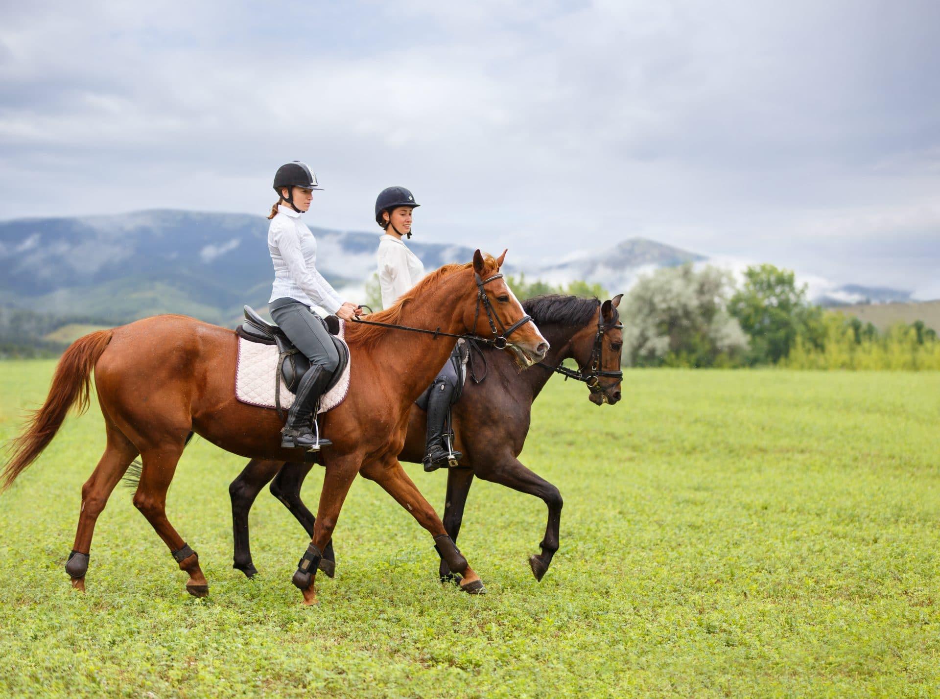 horse riding ljubljana
