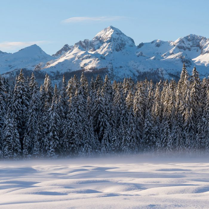 Mountains and forest in winter