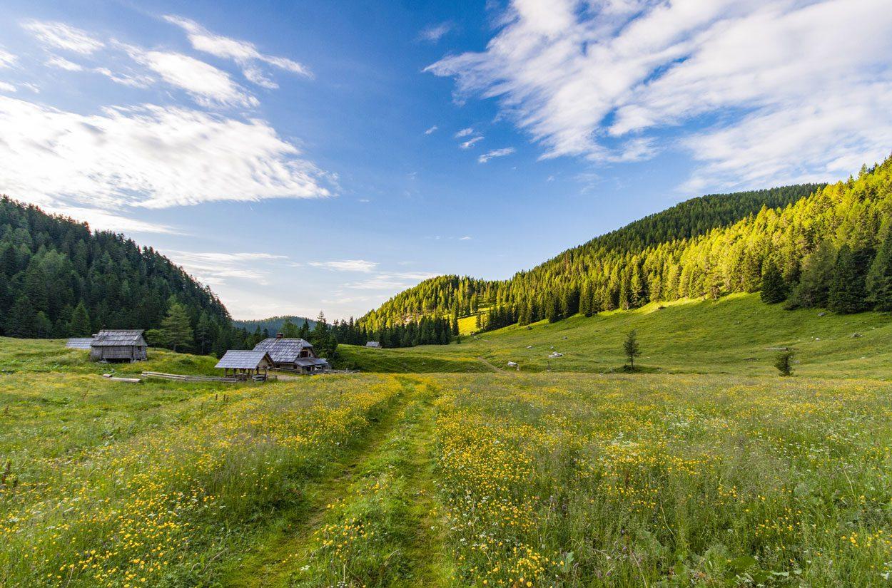 Pokljuka nature with houses