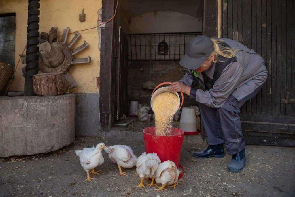 Activities on a traditional farm in Slovenia
