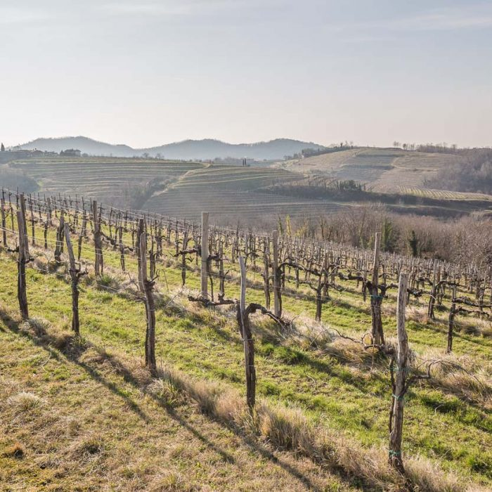 Goriska brda (the vineyards of Goriska brda)