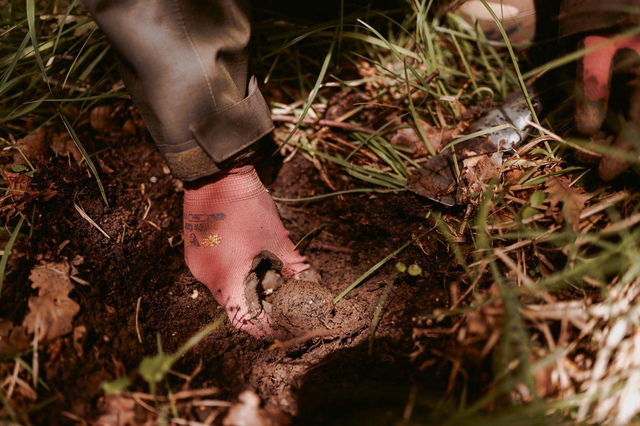 Truffle-hunting-istra