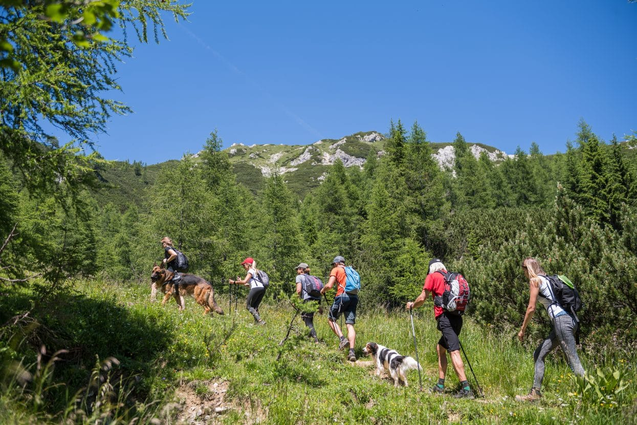 Visevnik group of hikers with dogs